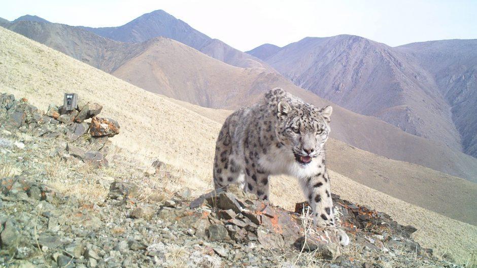 10 Mongolische Wildtiere Arten