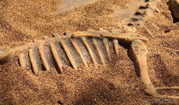 Unbekannte Fakten über die Wüste Gobi