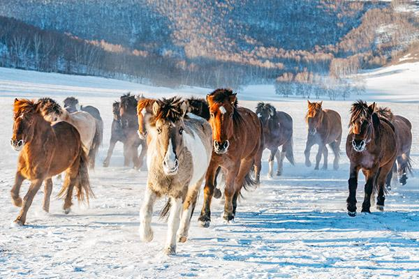 Winterfeste in der Mongolei